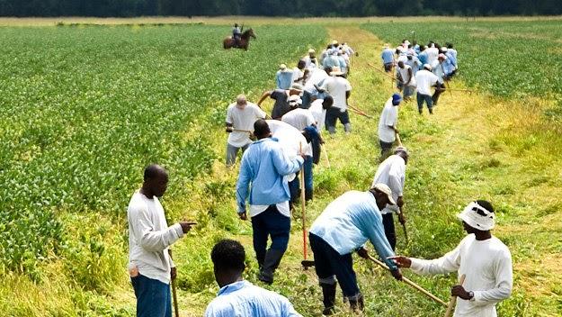 Prison-Farm.jpg
